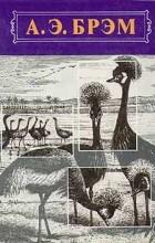 А. Э. Брэм - А. Э. Брэм. Жизнь животных. В трех томах. Том 2. Птицы