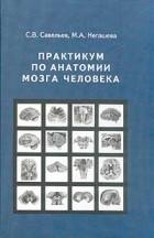 - Практикум по анатомии мозга человека: Учебное пособие для вузов